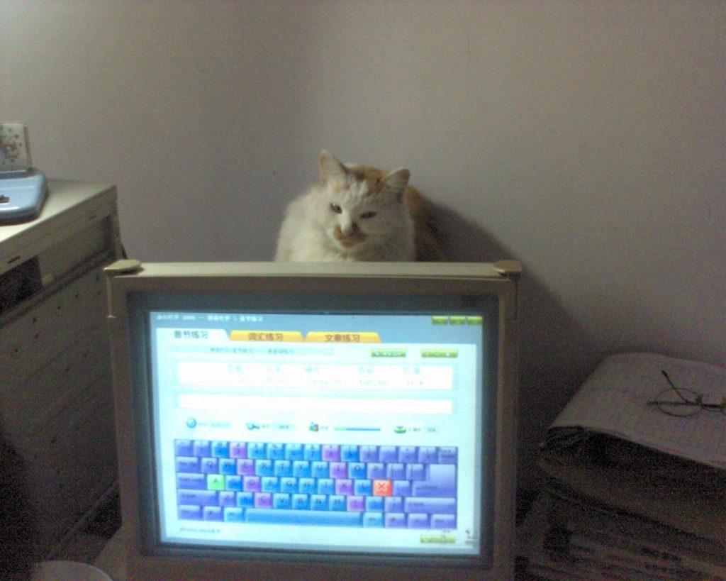 """想家里的猫猫,那只""""贼""""了"""